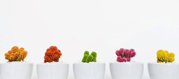 5-exemples-crop 2.jpg