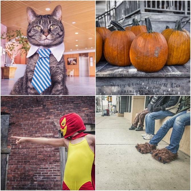 Exemple de photos libres de droits Gratisography