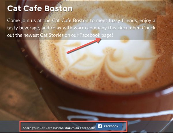 Cat_cafe_boston_facebook_highlights.png